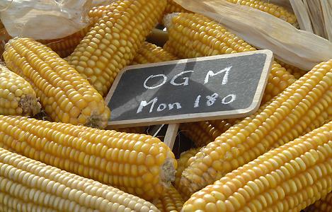 OGM_MON_180_SIPA