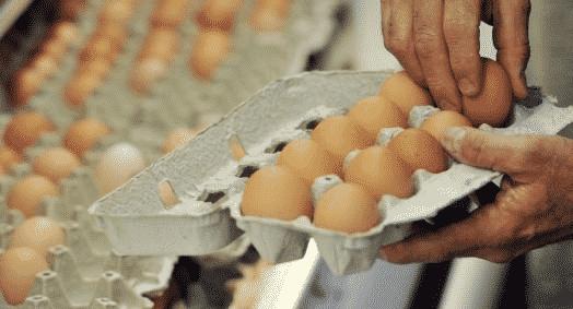 Fipronil : les premiers résultats des enquêtes en élevage