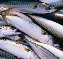 L'Islande tente de noyer le poisson.