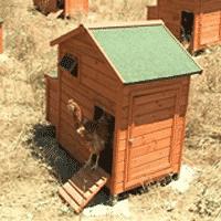 Vie de château pour les poules !