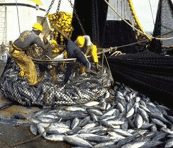 Bruxelles provoque la colère des pêcheurs et du ministère !