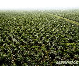 Les margarines Fruit d'Or à l'origine de déforestations et de violences ?