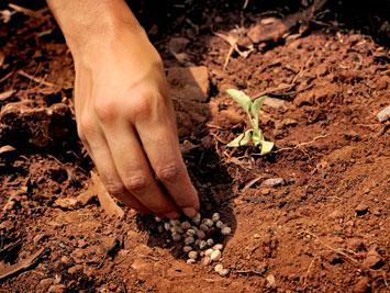 Ressemer sa récolte sera à présent interdit ou taxé.