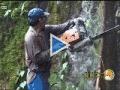 Documentaire sur l'huile de palme.