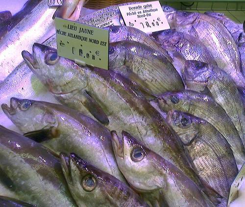 Le prix du poisson s'annonce salé.