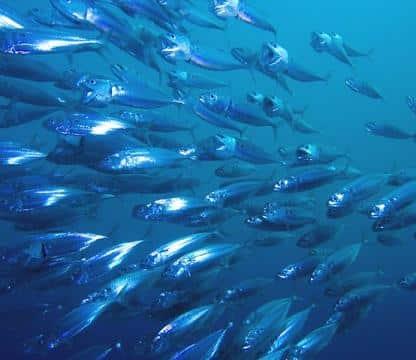Quotas de pêche définis, Bruno Le Maire ravi !