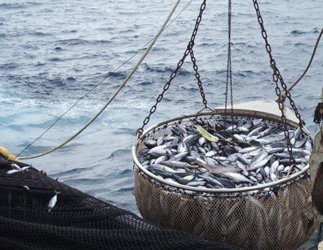 L'Union européenne proscrit la pêche au bar jusqu'au mois d'avril prochain