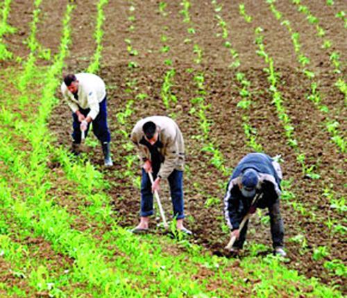 Polémique autour d'un accord libéralisant le commerce agricole entre l'UE et le Maroc.