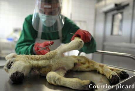 Les professionnels de l'élevage réunis autour de la menace du virus de Schmallenberg.