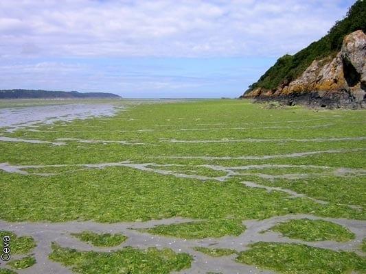 Algues vertes, le rapport du ministère : il faut
