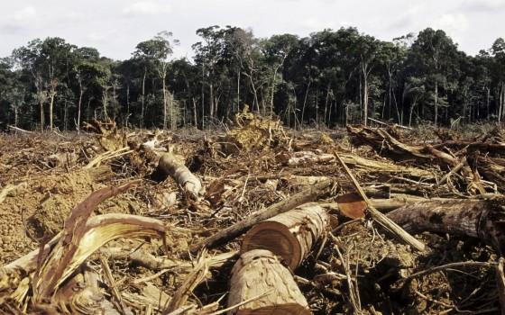 Huile de palme durable et déforestation : Mythe ou réalité ?