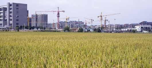 En Chine, 2 % des terres sont trop polluées pour les cultures agricole