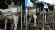 Prospérité Fermière et Ingredia lancent un lait écoresponsable et «sans OGM»