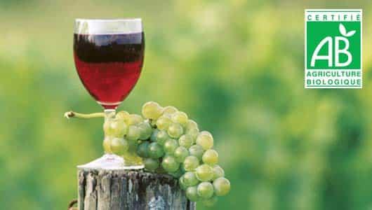 Le vin bio : un succès, mais jusqu'à quand ?