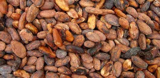 Travail des enfants : Mondelez à la traîne dans les plantations de cacao