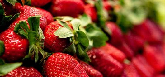 Le faible prix des fraises espagnoles indigne les producteurs français