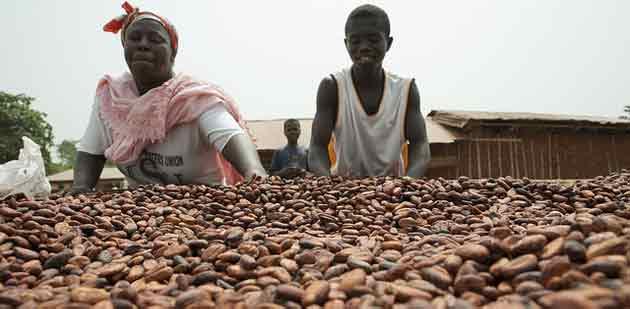 Pauvreté des producteurs de cacao : pas de futur pour le chocolat