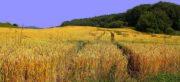 Exportation de blé : InVivo propose ses solutions aux coopératives