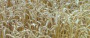 Les principales organisations agricoles et agroalimentaires travaillent leur stratégie sur les bords de la Mediterrannée