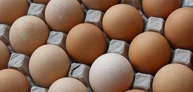 Oeufs Matines : l'entreprise veut doubler ses ventesd'œufsen GMS