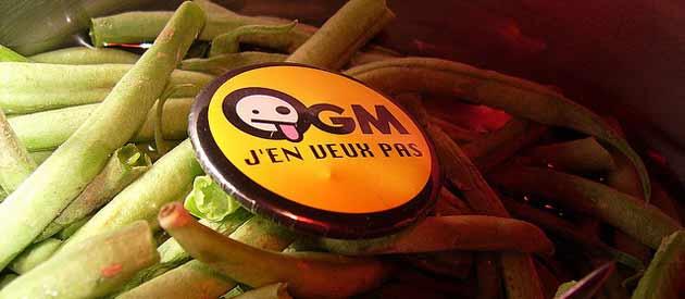 OGM: la culture de maïs transgénique définitivement interdite