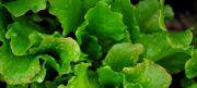 Toshiba se lance dans la production de légumes