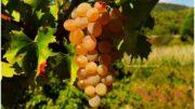 Traité transatlantique: la filière viticole pose ses conditions