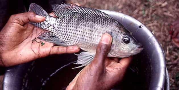 Le marché mondial du poisson et des fruits de mer va croître jusqu'en 2020 d'après MarketLine