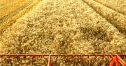 Céréales : La France contrainte d'importer du blé du Royaume-Uni et de Lituanie