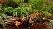 Fruits et légumes: 43% des Français choisissent de faire pousser ce qu'ils mangent