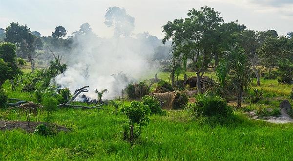Huile de palme: Le leader français de l'huile vise la Côte-d'Ivoire