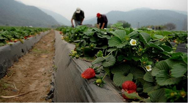 Emploi: Le gouvernement instaure un comité de suivi agricole et agroalimentaire