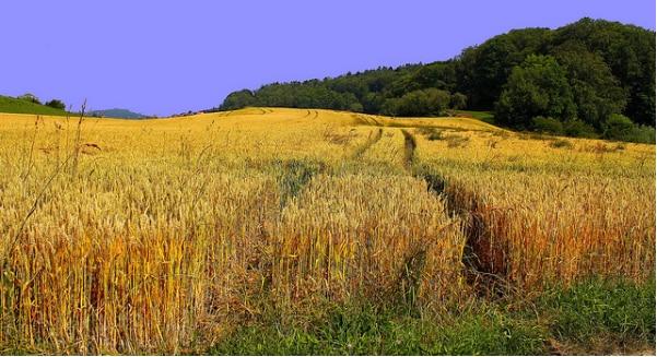 Agro-écologie: la France à l'initiative du réseau européen sur les MAEC