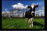 Ferme des 1000 vaches : Procès des militants de la Confédération Paysanne