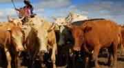 L'Argentine n'est plus le géant de la viande bovine