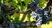 Vin: La Cité des Civilisations du vin devrait coûter 81 millions d'euros à Bordeaux