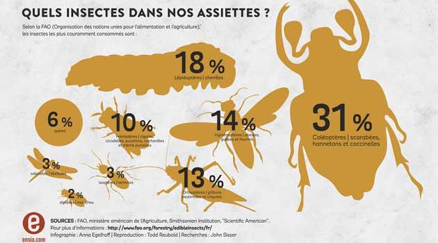 Quels insectes dans nos assiettes?