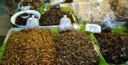Découvrez le goût des insectes comestibles