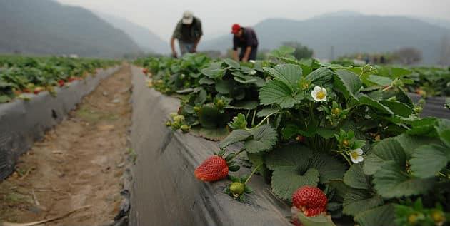 Pénibilité: les coopératives agricoles appellent au boycott du dispositif en l'état