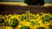 Agriculture bio: les aides réduites de 25 %