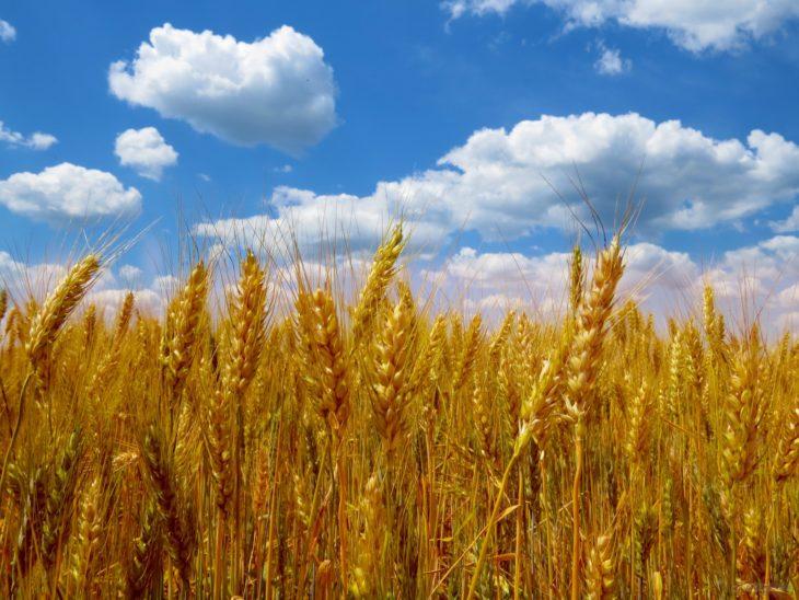 De nouveaux modèles de croissance pour les industries agroalimentaires ?