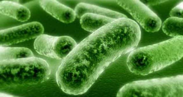 Listeria: des contaminations en baisse dans les IAA