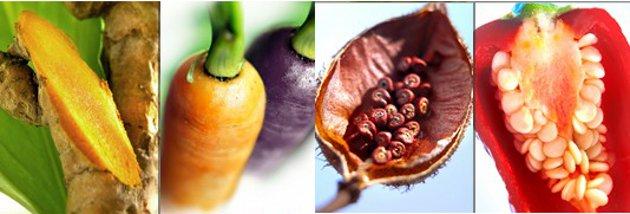 [2015] Food Ingredients Europe: cinq nouveautés goût et couleur