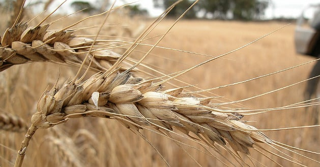 Axéréal a croqué Agri-Négoce, filiale d'Ameropa