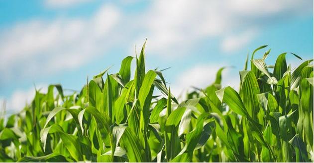 Soufflet Agriculture et sa filiale Soufflet Altlantique décrochent leur certification «Agriculture biologique»