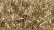 [2016] Rhône-Alpes: une région agroalimentaire attractive pour accueillir le Sepag