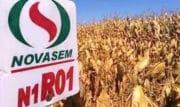Semences de France rachète 100% des parts de l'italien Novasem