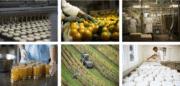 Panorama des IAA Françaises: entre consolidation et défis