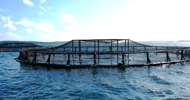 Avec Acui-T, Neovia fait le pari de l'aquaculture