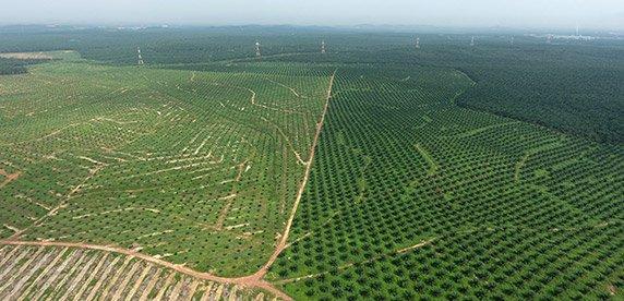 Traçabilité : Nestlé et Ferrero s'engagent